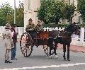 Photo n° 29304 CIAT Deauville 2013  Affichée 18 fois Ajoutée le 17/10/2013 10:16:57 par Renata  --> Cliquer pour agrandir <--