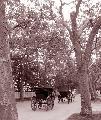 Photo n° 29347 CIAT Deauville 2013  Affichée 27 fois Ajoutée le 17/10/2013 10:17:01 par Renata  --> Cliquer pour agrandir <--