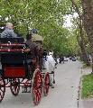 Photo n° 29350 CIAT Deauville 2013  Affichée 23 fois Ajoutée le 17/10/2013 10:17:01 par Renata  --> Cliquer pour agrandir <--