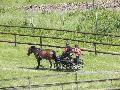 Photo n° 33296 LOUVRES 2015 Les Attelages de Conti  Affichée 12 fois Ajoutée le 30/05/2015 17:36:24 par JeanClaudeGrognet  --> Cliquer pour agrandir <--