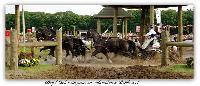 Photo n° 37976 BREDA CdM 2016 photo Heliosness  Affichée 55 fois Ajoutée le 03/09/2016 18:52:38 par JeanClaudeGrognet  --> Cliquer pour agrandir <--