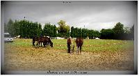 Photo n° 38199 ALIXAN 2016 photo Héliosness  Affichée 9 fois Ajoutée le 21/09/2016 08:04:28 par JeanClaudeGrognet  --> Cliquer pour agrandir <--