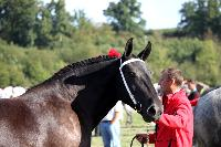 Photo n° 38468