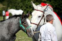 Photo n° 38469