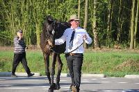Photo n° 43741KRONENBERG  ambiance vétérinaireMattieu Ory DegommeAffichée 5 fois, 1 voteAjoutée le 19/04/2018 13:03:33 par JeanClaudeGrognet--> Cliquer pour agrandir <--