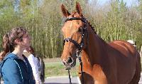 Photo n° 43796KRONENBERG  ambiance vétérinaireAffichée 3 fois, 1 voteAjoutée le 19/04/2018 13:03:35 par JeanClaudeGrognet--> Cliquer pour agrandir <--