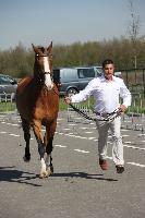 Photo n° 43843KRONENBERG  ambiance vétérinaireMichaël SellierAffichée 13 fois, 1 voteAjoutée le 19/04/2018 13:03:38 par JeanClaudeGrognet--> Cliquer pour agrandir <--