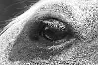 Photo n° 45210 CAT La Chevillonière JP Giraud - photovendee85.fr  Affichée 2 fois Ajoutée le 11/07/2018 13:29:53 par JeanClaudeGrognet  --> Cliquer pour agrandir <--