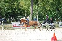 Photo n° 45618 Rosières aux Salines photo Anne Sophie Azzos-IFCE  Affichée 3 fois Ajoutée le 11/08/2018 19:39:59 par JeanClaudeGrognet  --> Cliquer pour agrandir <--