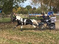 Photo n° 49153 KISBER CdM poneys photo Dudule Anna Chrismann Affichée 56 fois, 3 votes Ajoutée le 29/09/2019 10:14:50 par JeanClaudeGrognet